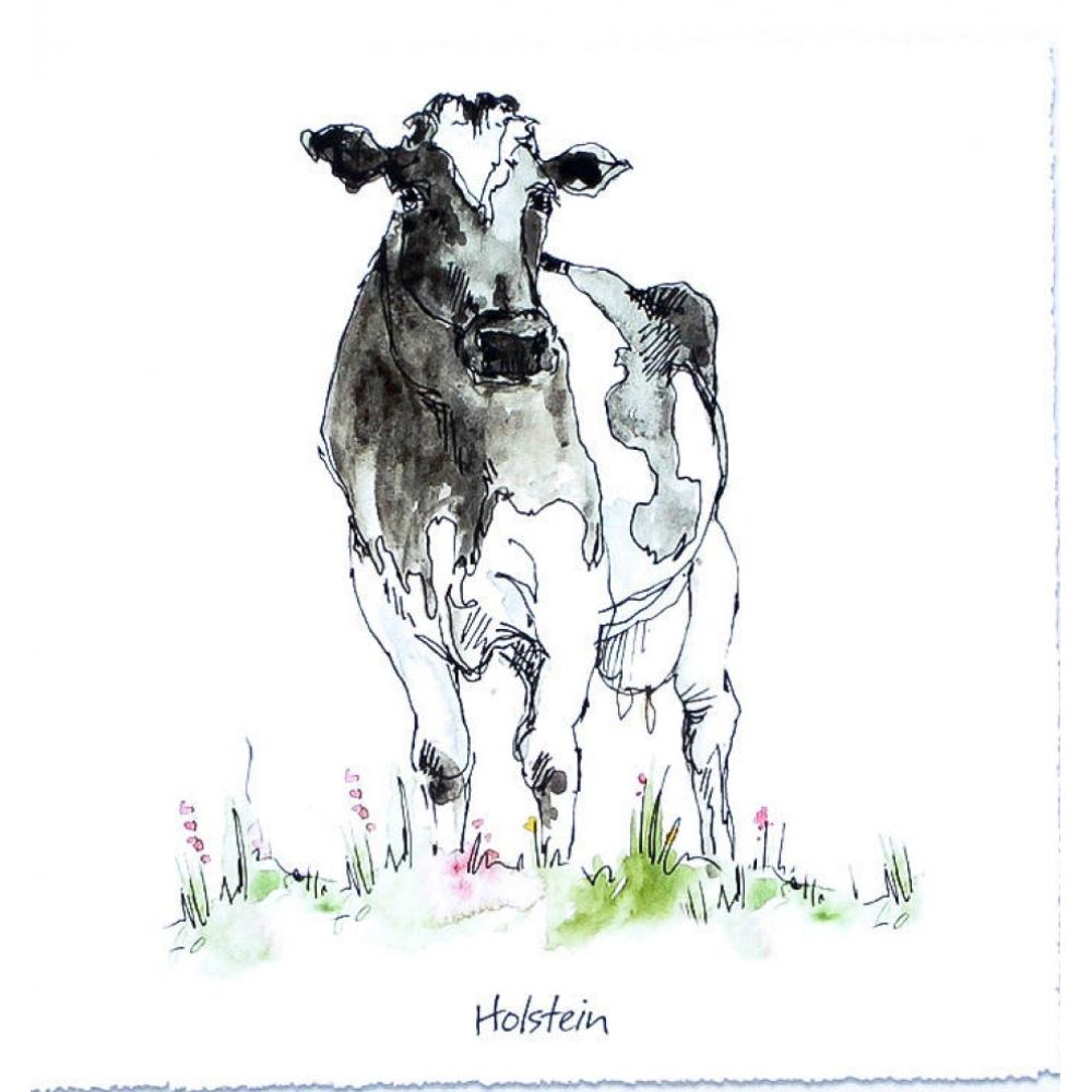 Angus Cow Framed Print Wall Art 25cm Square 2